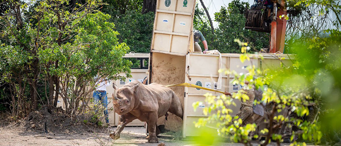 Gurkhas help relocate endangered black rhinos